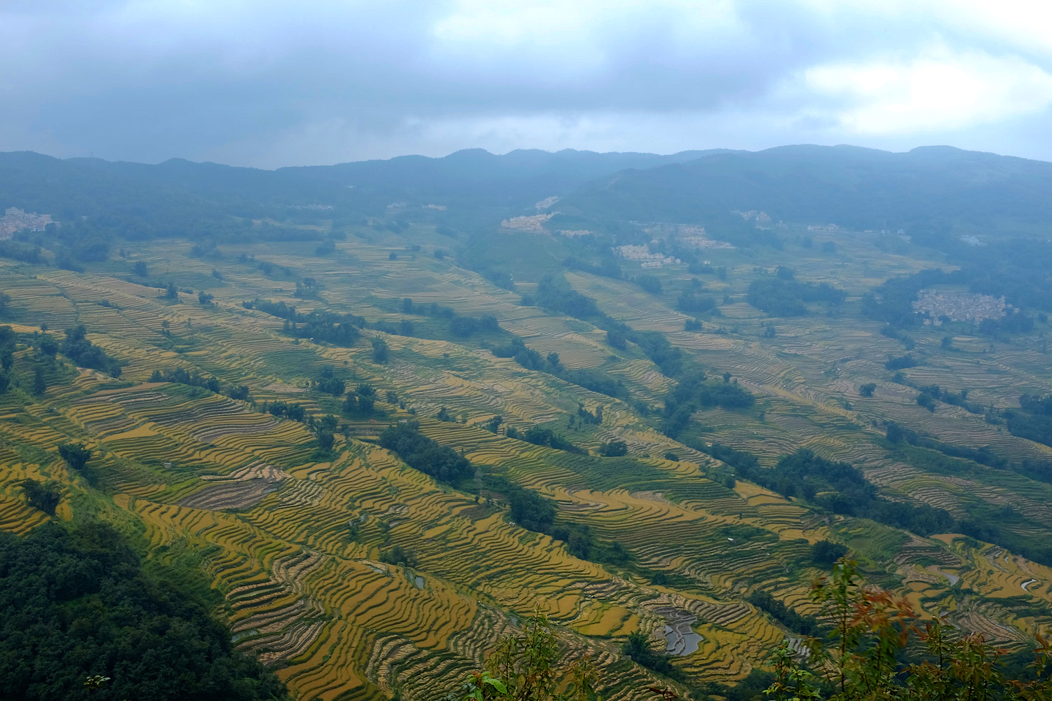 The rice terraces at harvest time
